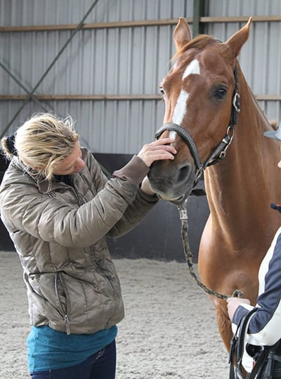 Checking the horse before the bit fit consultation