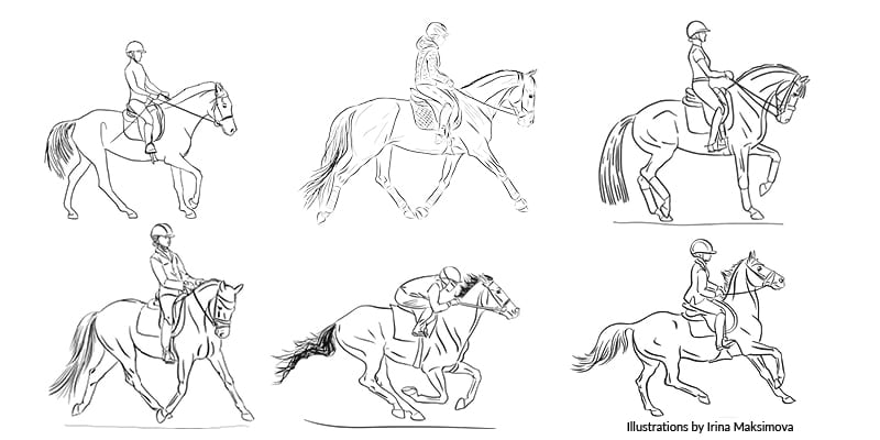 The way the rider holds their hands and gives the rein aids will affect the action of the bit.