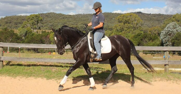 Black horse trotting while rider tests for self-carriage