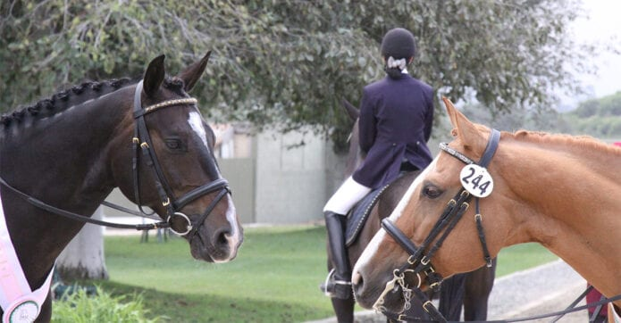 dressage horses stand around at a competition
