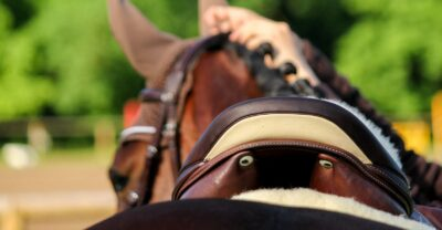 A rear view of the saddle on a horse's back