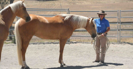 Dr Kate Fenner talks to the audience during a demo with her two palomino horses Nug and Pie