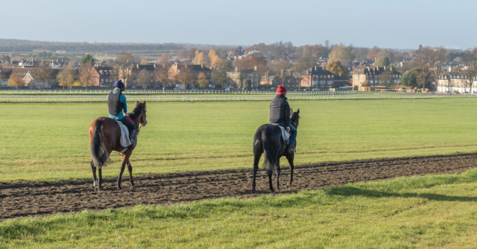 Two racehorses exercising in Newmarket early in the morning