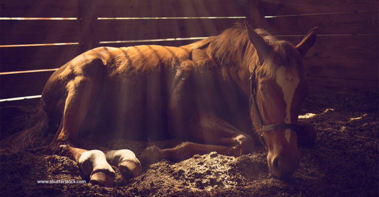 Equine Herpes Virus Outbreak: FEI World Cup Final Cancelled as Death Toll Rises