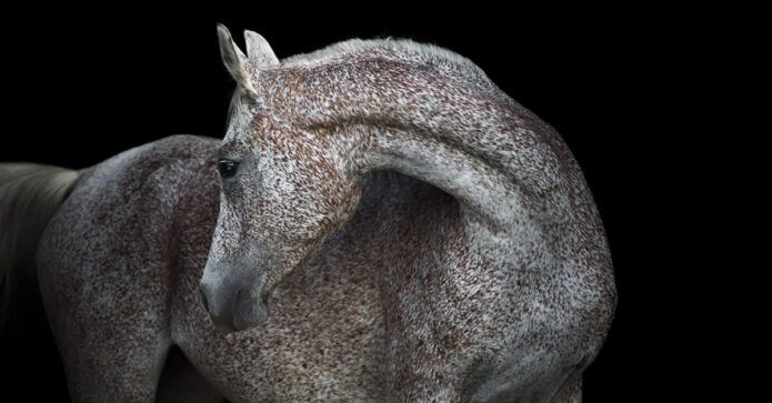 researchers identify the body language of pain in horses