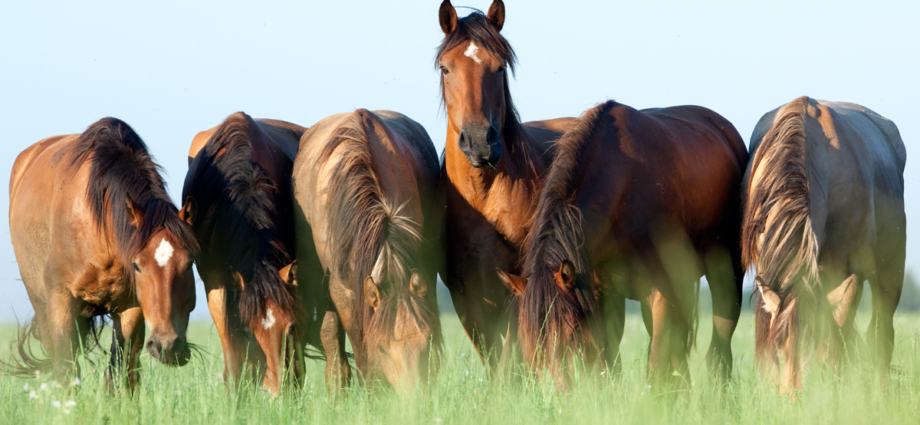 Natural and sustainable horse management