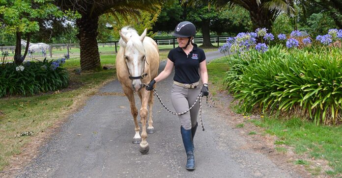 In-hand training - an essential part of all horse's training