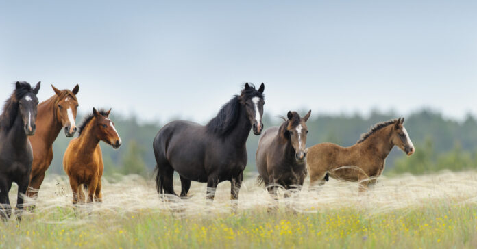 A group of horses and foals