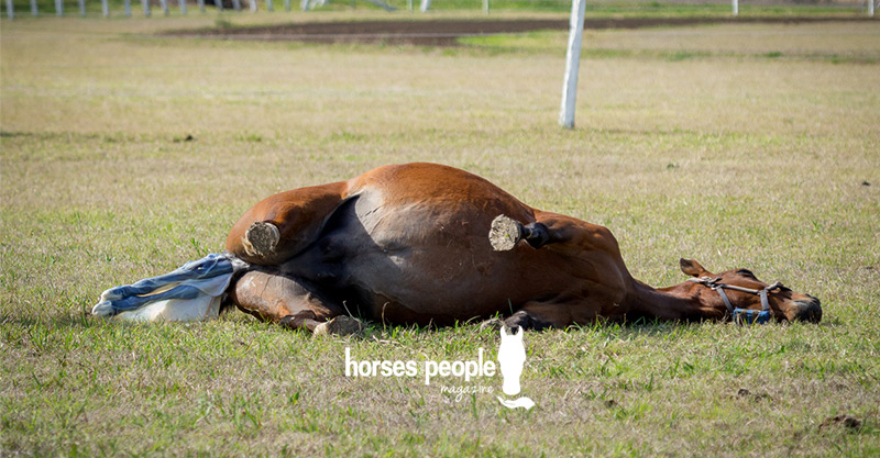 A mare foaling
