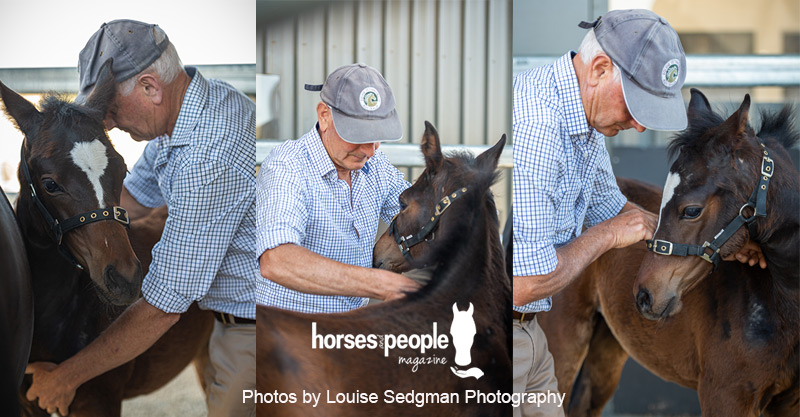 Foal being treated to ease the neurologic effect birth trauma