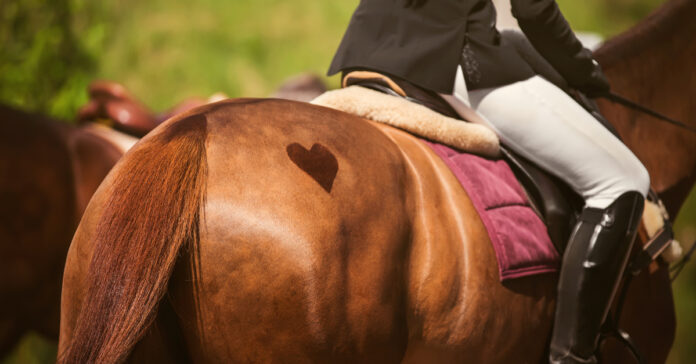 an ethical framework to help horse sports assess issues affecting their social licence to operate