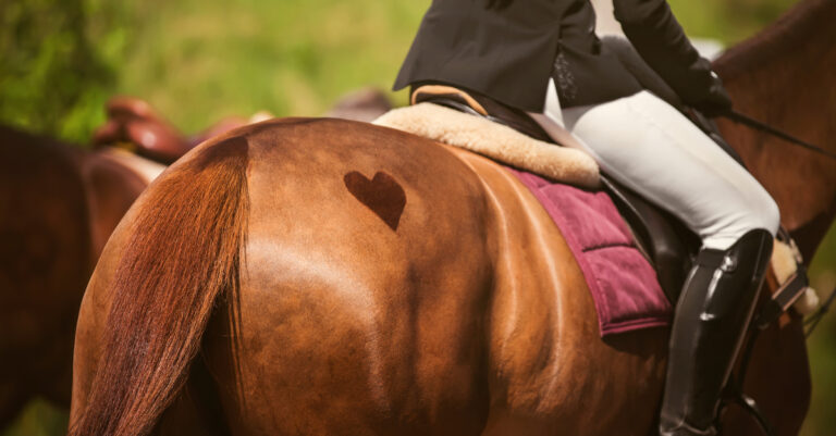 Roadmap for the Ethical Use of Horses in Sport