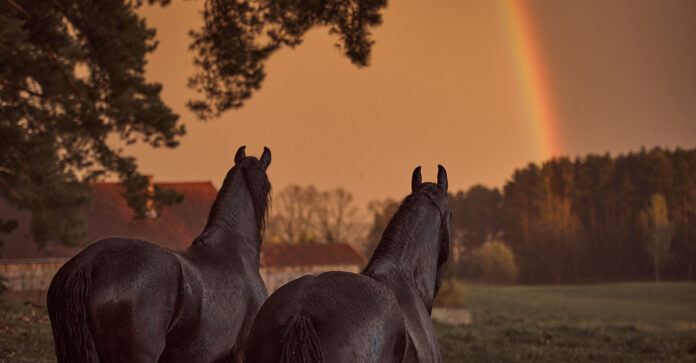 Horse euthanasia decisions are the hardest of all