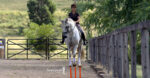 The shoulder-in is more than just dressage gymnastics