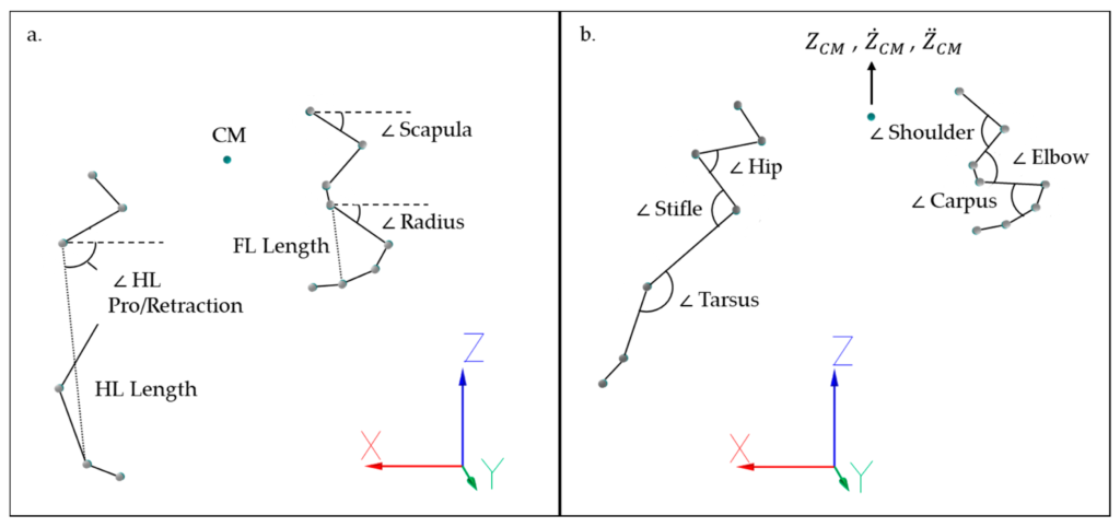 Image of the placement of anatomical markers and sensors placement for the analysis of jumping biomechanics