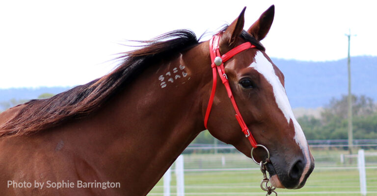 Standardbred Freeze Branding System Discontinued