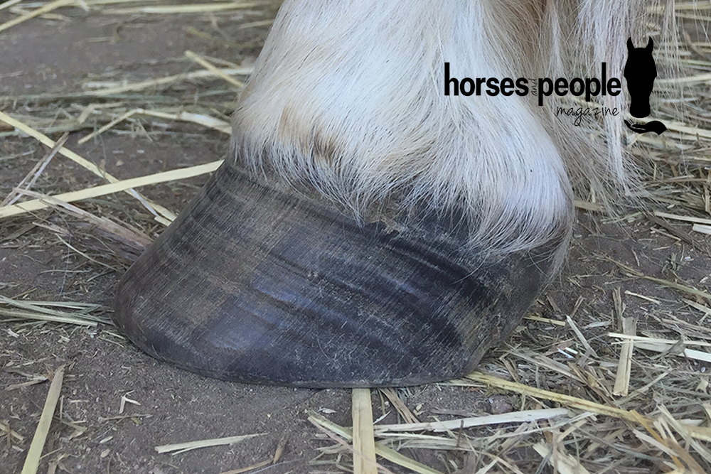 Learn to Recognise the Early Signs of Laminitis