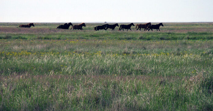 Horses in the Pontic-Caspian steppe were first domesticate for their milk as well as transport